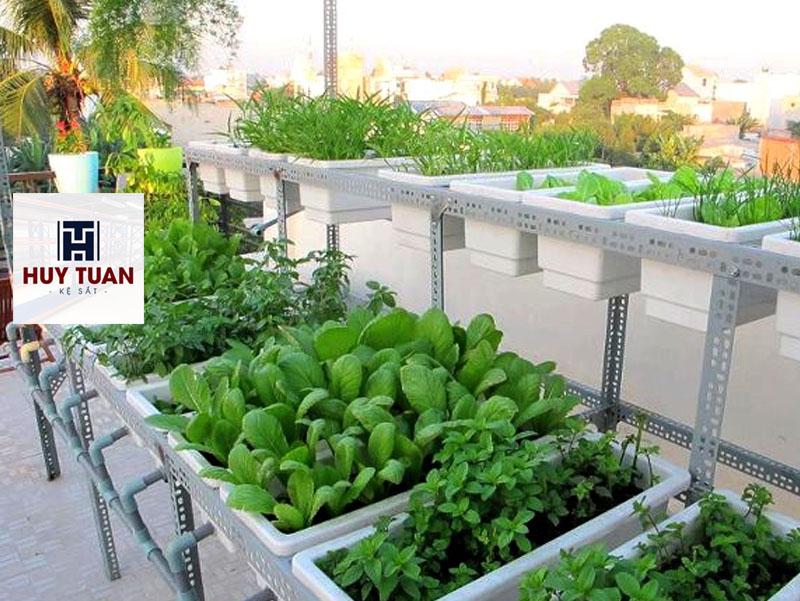 trồng rau sạch tại chung cư